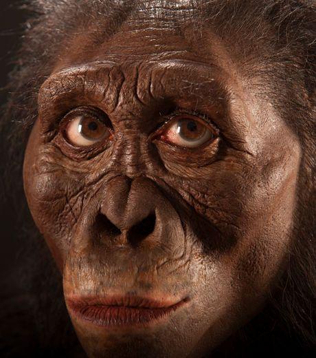 Lucy ~ John Gurche, Cleveland Museum. - Austrlopithéque afarensis, 3,2 Ma.