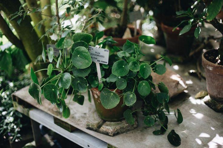 56 mejores im genes sobre planter en pinterest macetas - Bauhaus macetas ...