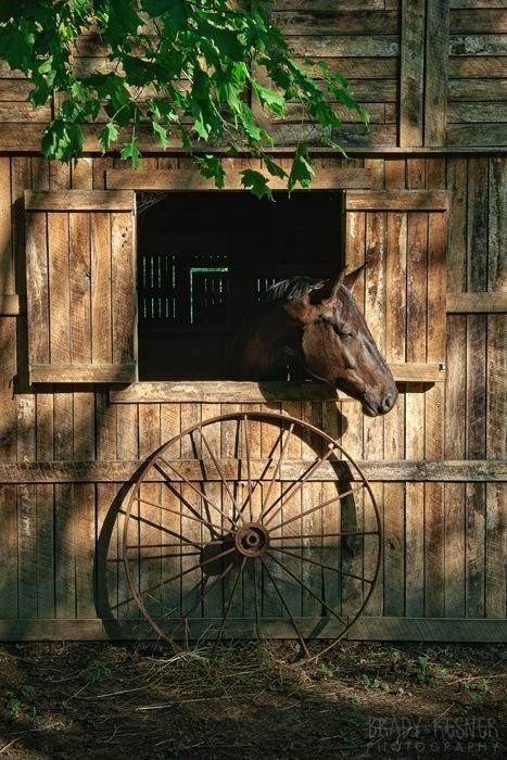 Old barns and horses
