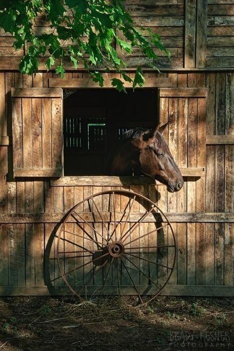 Farm:  Old #barn, horse, and wagon wheel.