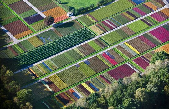 Aerial view of flowers & plant nursery, Veenendaal, The Netherlands