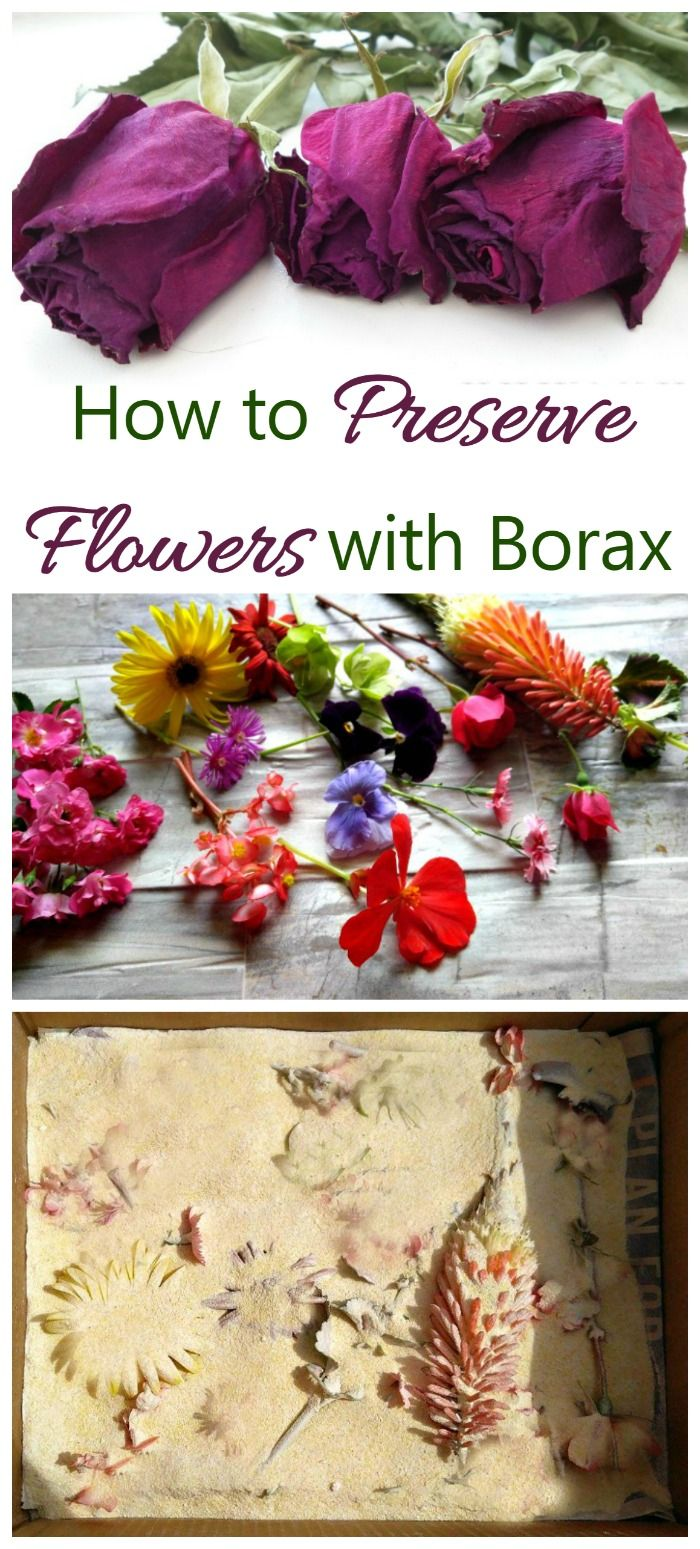 Borax and cornmeal can be mixed together and then sprinkled to preserve flowers. It's easy to do...all you need is a box and a bit of patience.