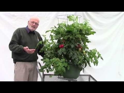 Bob and Potato Tomato - YouTube