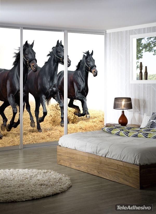 papier peint vinyle chevaux 3 papier peint vinyle animaux pinterest. Black Bedroom Furniture Sets. Home Design Ideas