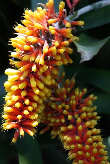Royal Botanic Gardens in Sydney, Australia