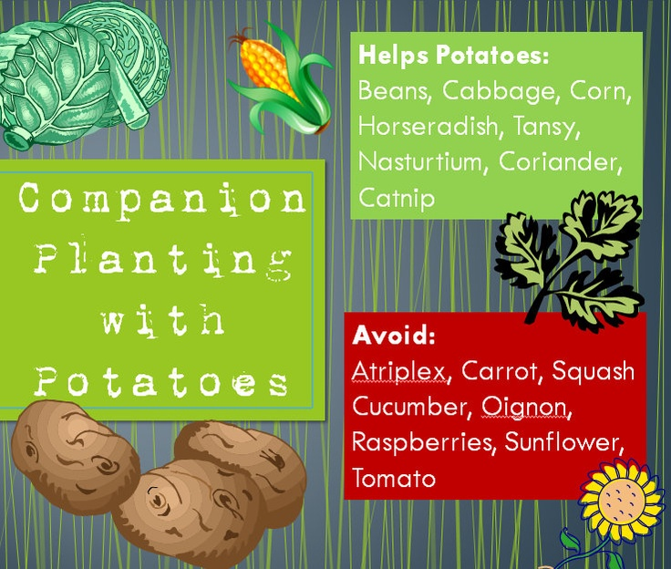 Best Companion Planting Images On   Vegetable Garden