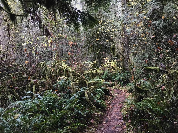 Oxbow Park Gresham Oregon USA #hiking #camping #outdoors #nature #travel #backpacking #adventure #marmot #outdoor #mountains #photography