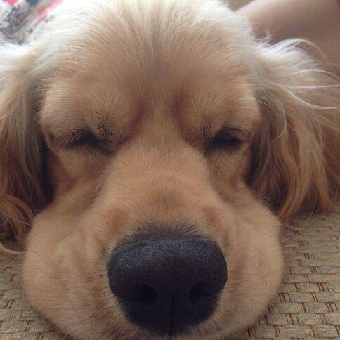 Sleeping beauty :)