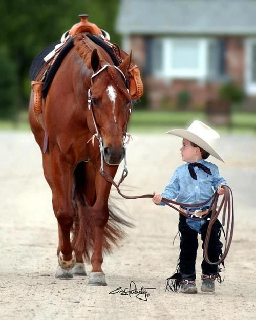 """* * HORSE: """"Dis should be rich. A tyke rider and noes one around. Me wills haz to figure it out when he boards. Hopes he  nots a brat."""""""