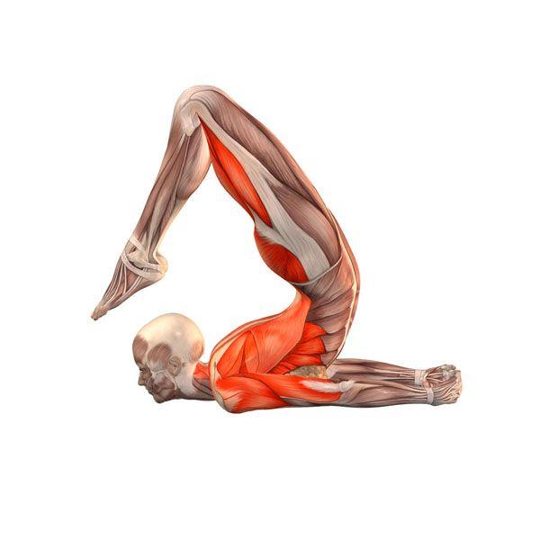 Locust pose with legs bent - Salambhasana with legs bent - Yoga Poses | YOGA.com