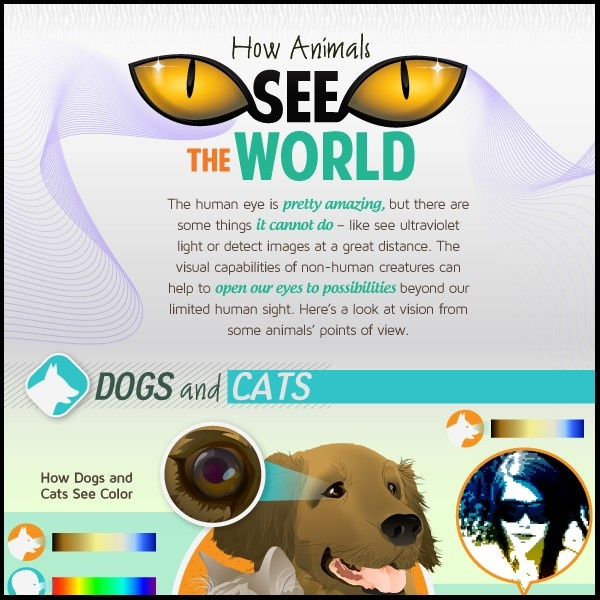 How animals see the world (Infographic) bird, cat