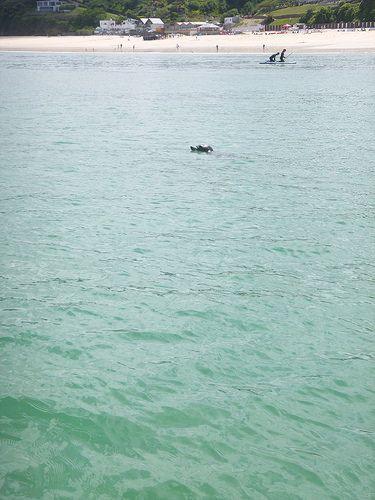 Seals...   by SUPinaBag UK