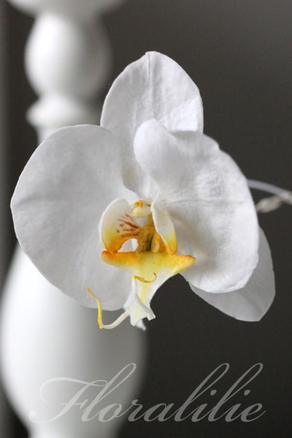 Wafer Paper Phalaenopsis Orchid by Floralilie