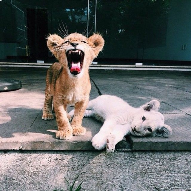 "* * "" Cut de crap! She be meez best friend and don'ts matter if she be white; she stillz a lion! Ands me ain't lyin' ! """