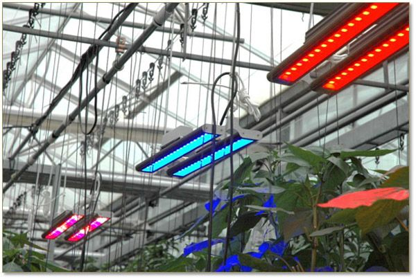 Future of LED Grow Lighting