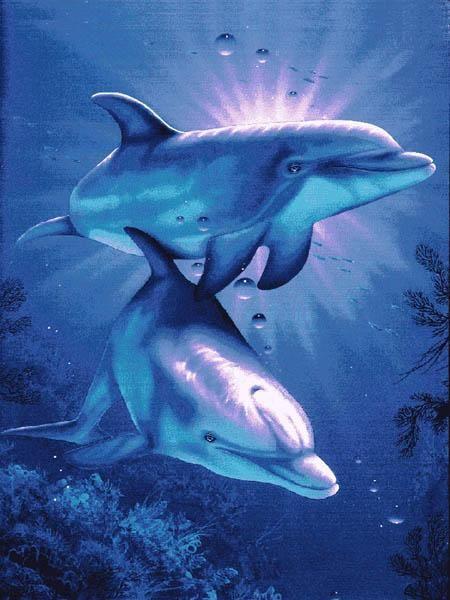 Dolphin Art                                                       …