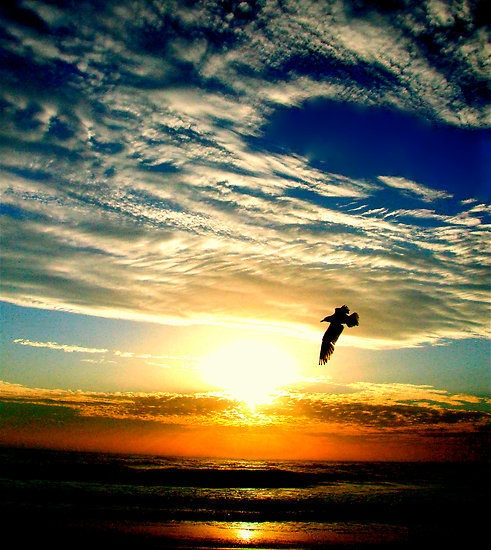 I like the layering of colours in this image created by the sunset over the water. There is warm orange glow at the bottom of the image in contrast with the warm blue at the top. This is broken by the bright white light of the sun that serves as a back sidelight shadowing the image of the flying bird. I like the fact that the bird is in flight because it adds a sense of movement.
