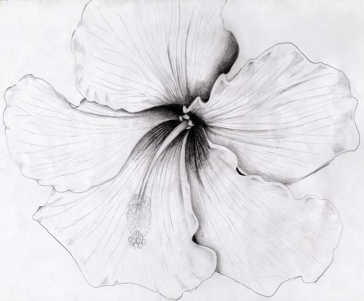Hibiscus by o0StarrieSkye0o.deviantart.com on @DeviantArt