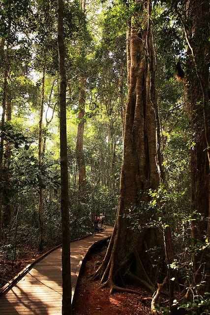 Lamington National Park, rainforest in south-east Queensland, Australia (by Tezza).
