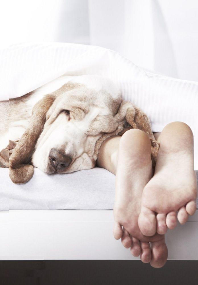 Dog. Cuddles. Feet.