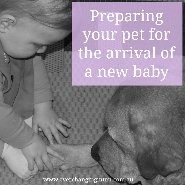 *This post is sponsored by Frontline Plus. Many families begin well before the arrival of any children, with the adoption of a cat or dog. My husband and I were the proud parents of a gorgeous, lov…
