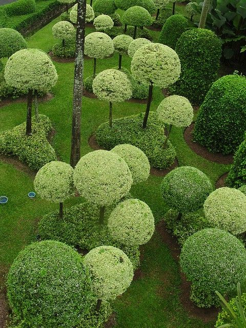 Pom pom trees.