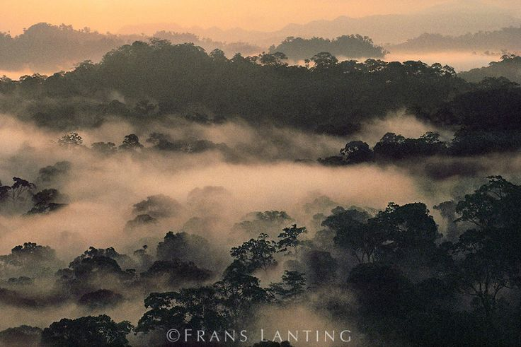 Lowland rainforest, Danum Valley Conservation Area, Borneo