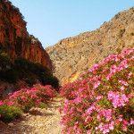 Wandelmogelijkheden op Kreta en singelvakantie