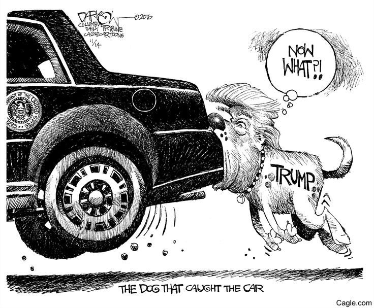 The Trump That Caught the Car