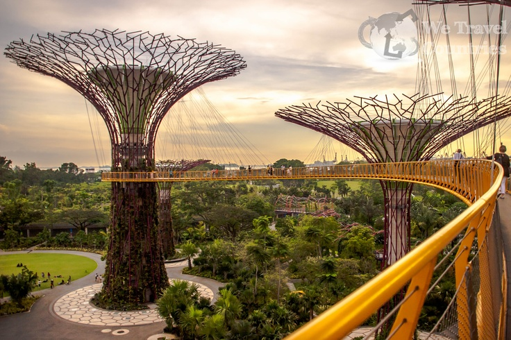 The man made trees at the gardens by the bay collect solar energy during the day for use as a spectacular light show at night