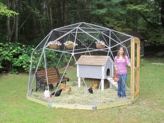 Best 20 chicken enclosure ideas on pinterest for Chicken enclosure ideas