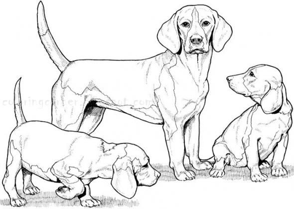 Realistic Dog Coloring Pages To Print Out Puppy Coloring Pages Dog Coloring Page Animal Coloring Pages