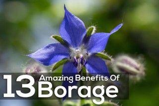 Benefits Of Borage For Skin
