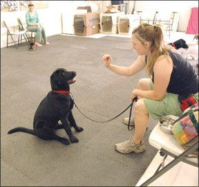 Getting the Most Out of Puppy Kindergarten  Your pup can only do as well as you do. | The Whole Dog Journal