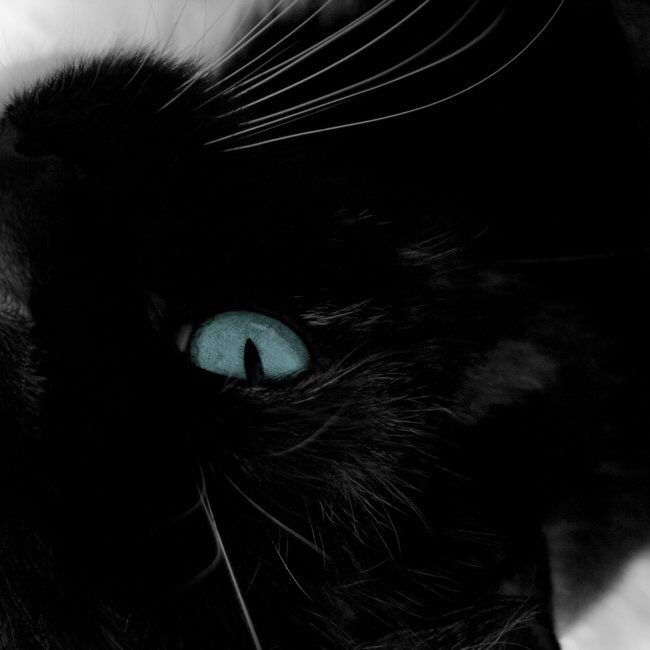 Black Cat Blue Eyes Black Cat Aesthetic Blue Eyes Aesthetic Cat With Blue Eyes