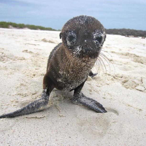 Santa Cruz, Galapagos, Ecuador — by Rich Barton   Count ...
