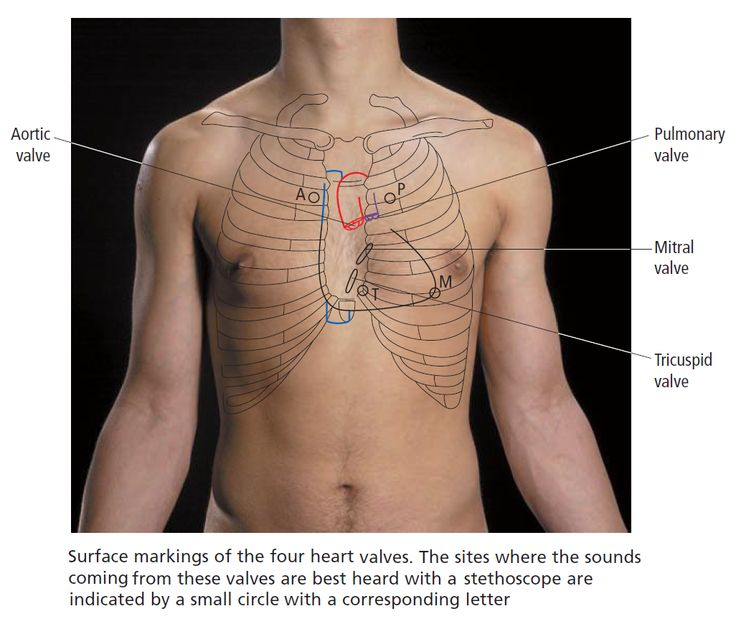 9 Best Human Surface Images On Pinterest Med School Surface And
