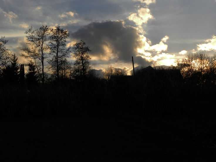 Copaci desfrunziti, contrejour
