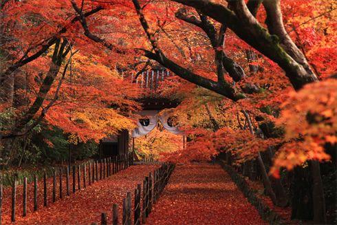 あの舞台をプレイバック 紅葉の名場面9選 秋特集「最も美しい紅葉を探して」 季節の特集 そうだ 京都、行こう。~京都への旅行、観光スポットで京都遊び~
