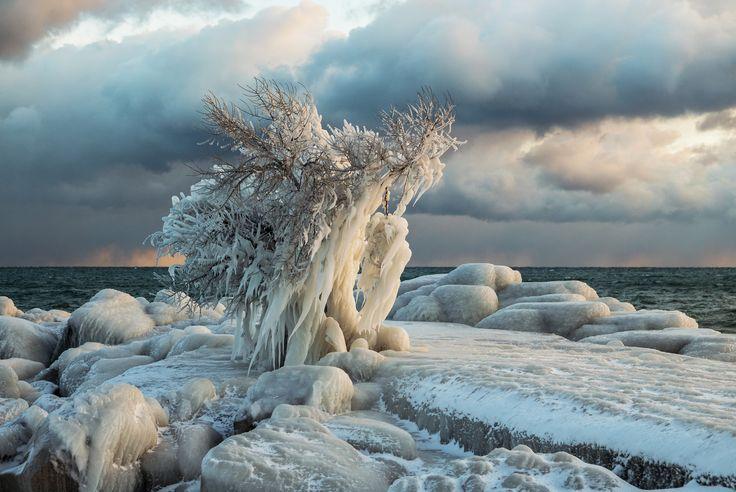 Frozen Tree | Flickr - Photo Sharing!