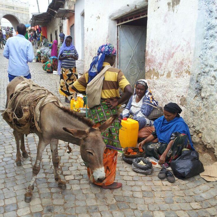 Mulo a Harar