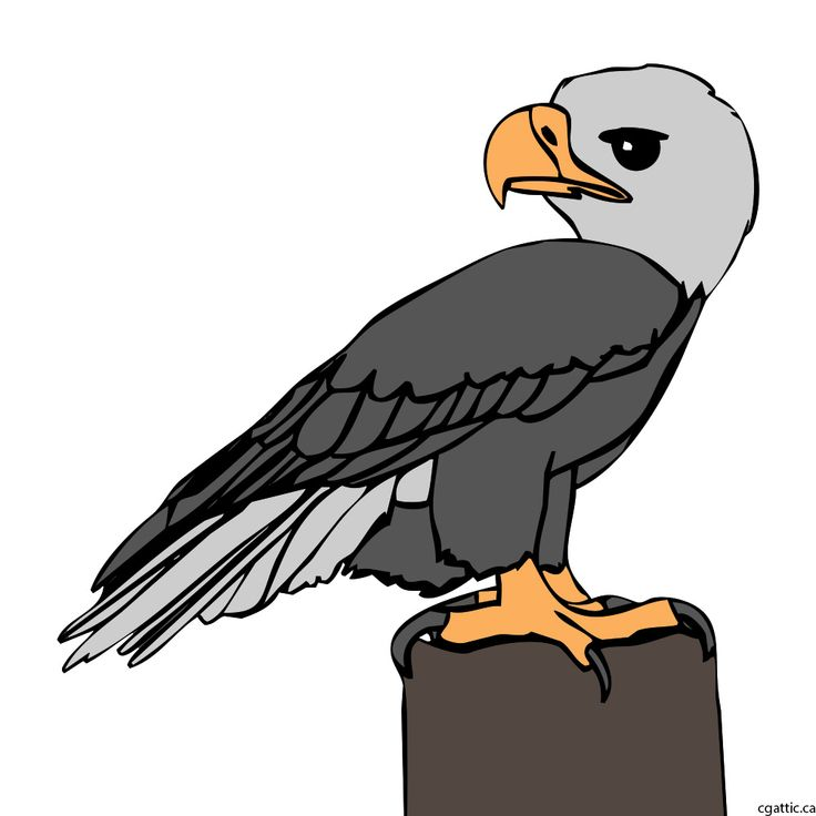 eagle cartoon step 3: fill in the shape of the eagle with the color of the specie intended.
