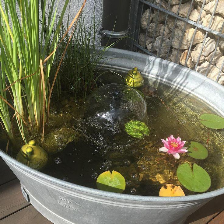 Sie haben auf Ihrem Balkon oder im Garten keinen Platz für eingroßes Wasserb… – Gartencenter