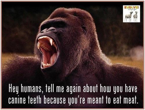 Hey human, tell me again how you have canine teeth because you're meant to eat meat.
