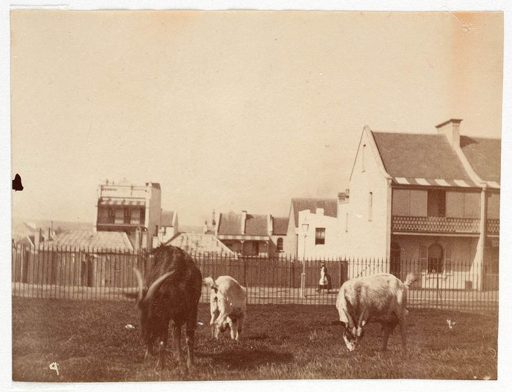 Street scene from Sydney, ca. 1885-1890 / photographed by Arthur K. Syer