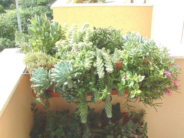Composizione piante grasse cerca con google piante e - Piante grasse con fiori ...