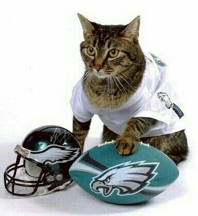 Image result for cat in NFL eagle uniform