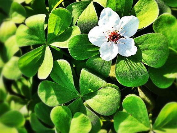 White Flowering House Plants 14 best indoor plants images on pinterest | indoor plants, flower