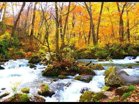[HD]奥入瀬渓谷の紅葉 Autumn leaves in Oirase Stream 紅葉便り 日本の紅葉