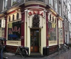 Reviews of top 16 Amsterdam Coffee shops - friendliest places with the best vibe and best weed on menu - Abraxas, 420 Café, Dampkring, Greenhouse, Grey Area and others